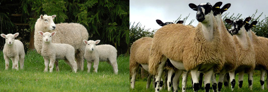Northern Nutrition Sheep Supplements