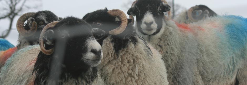 Northern Nutrition – Suppliers of Minerals, Proteins and Vitamins for Sheep
